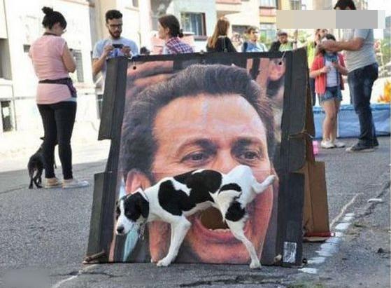那家的狗狗这么懂事