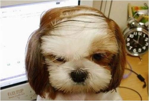 换了一个新发型