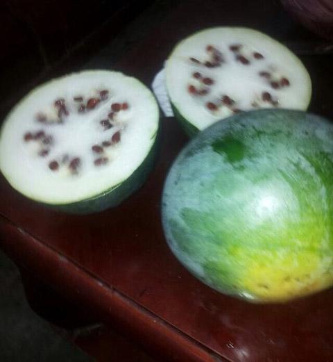 这是西瓜,还是冬瓜啊