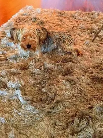 小狗狗一天被踩N次
