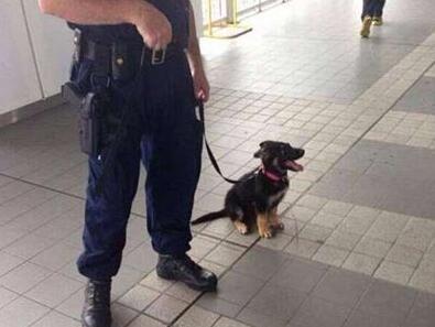 终于给我配警犬了