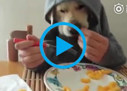 狗头人在吃饭