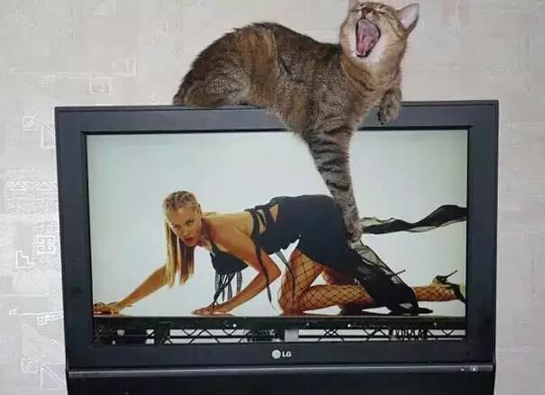 狂妄的色猫