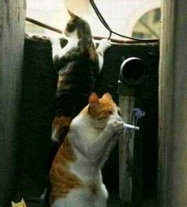 偷着抽烟的猫